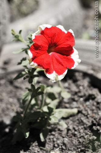 One red flower